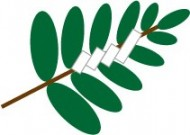tamagushi-img1